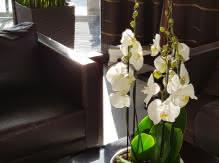 Réception - Hôtel Kyriad Prestige